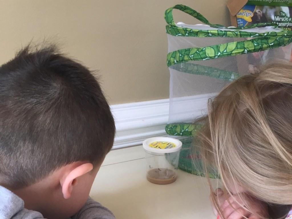 kids watching live caterpillars inside cup