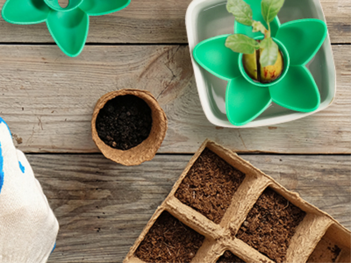 Avocado Planting Seed Bowl with soil