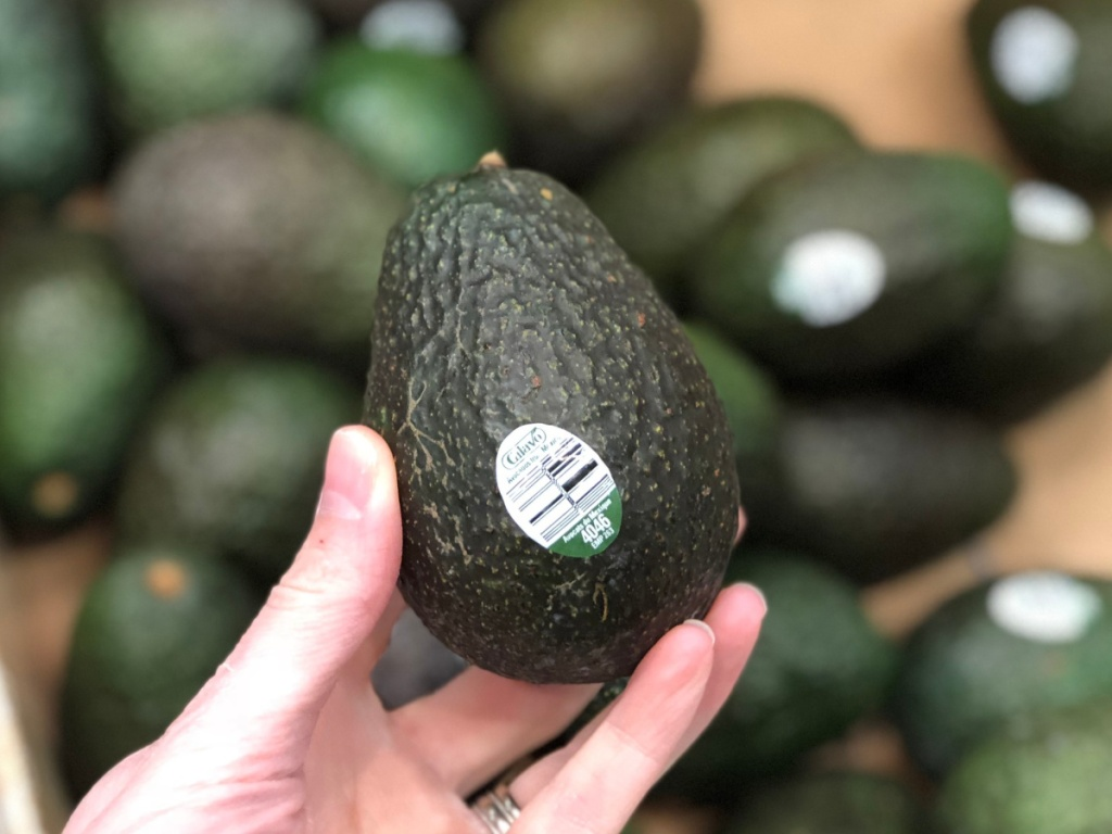 woman's hand holding up a fresh green avocado