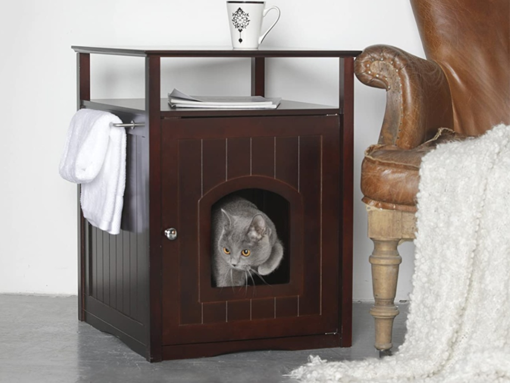 gray cat coming out of walnut little box cover table