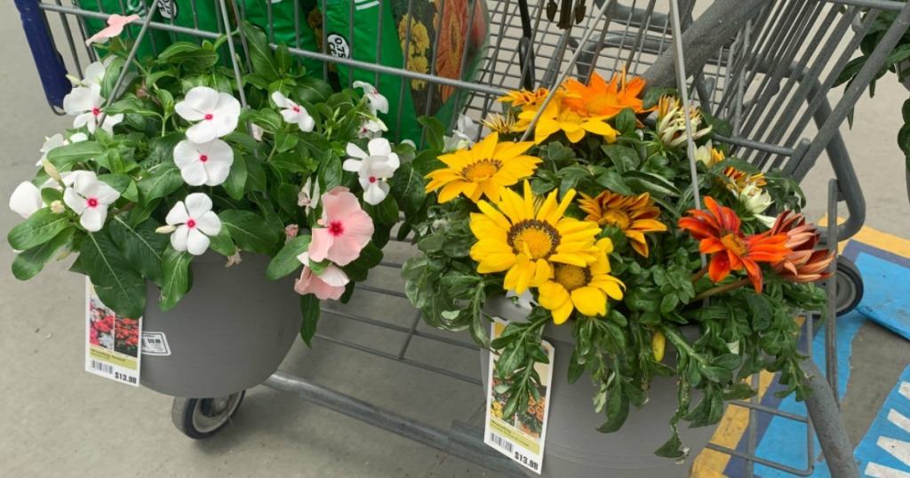 hanging baskets on a cart