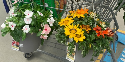 Lowe's 4th of July Sale – $5 Hanging Baskets, $2 Premium Mulch & More