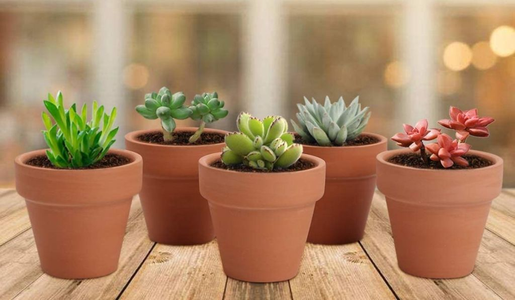 Mini clay pots filled with succulents