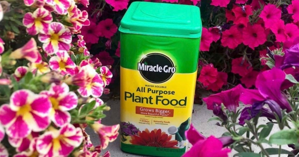 Miracle-Gro surrounded by flowers