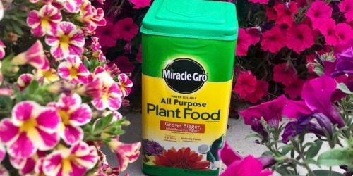 Miracle-Gro All Purpose Plant Food 10-Pound Only $14.98 on Amazon (Regularly $43)