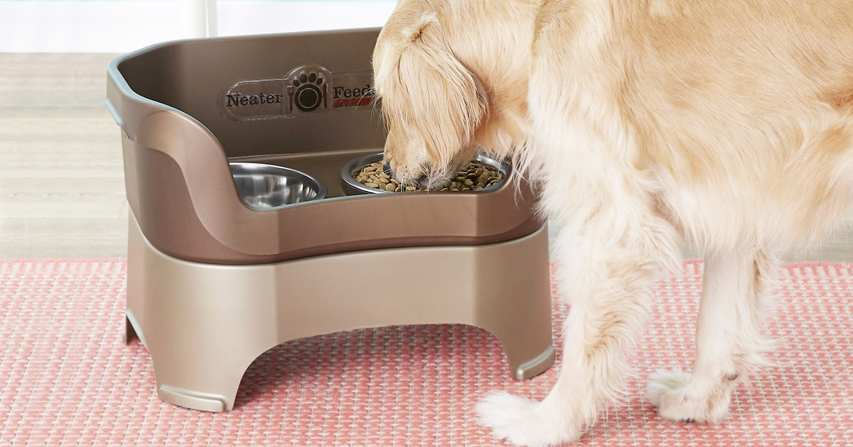 golden retriever eating out of elevated dog bowls with raised side walls