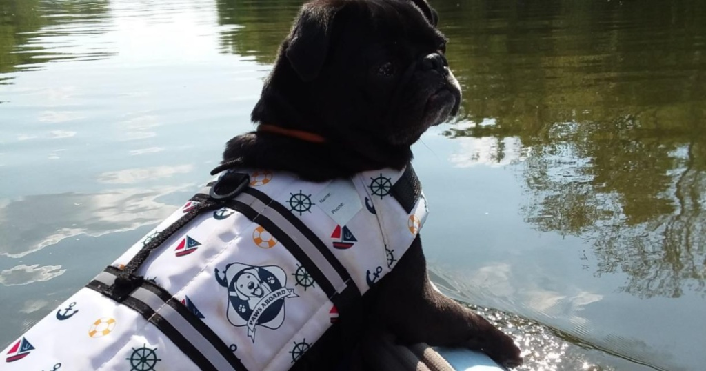 dog wearing life jacket on boat on water