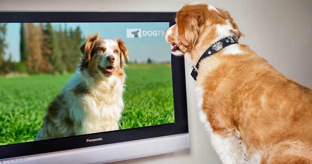 dog watching dogtv on screen