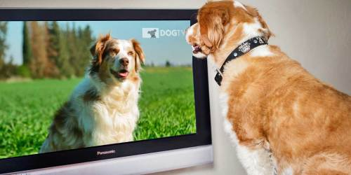 Have a Furry Friend?! Try DogTV for FREE!