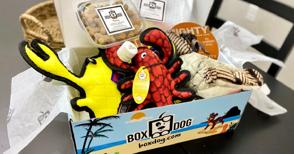 box dog summer box on table