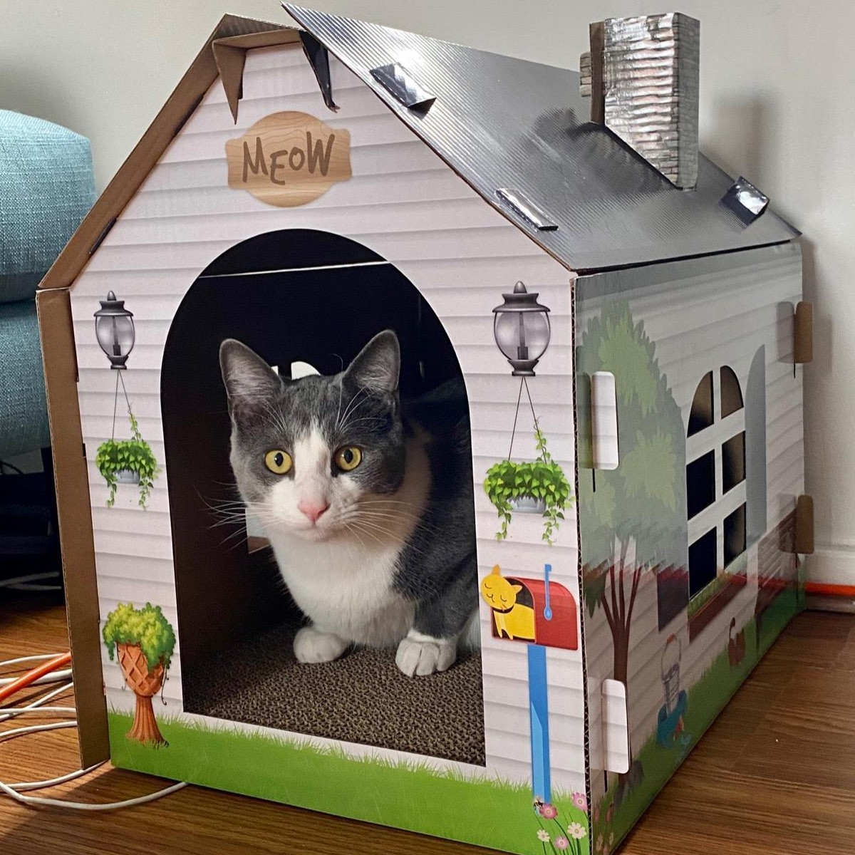 cat inside cardboard cat house