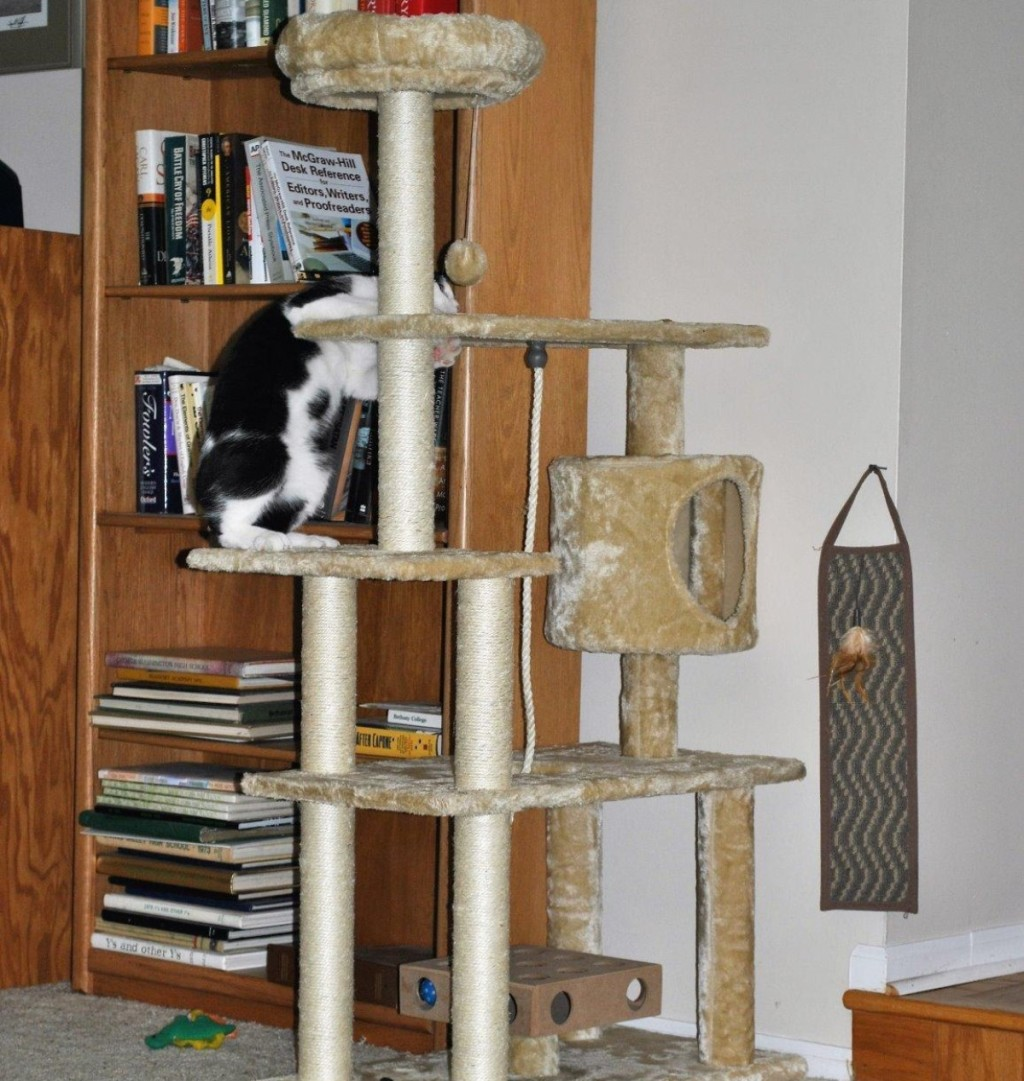 cat playing on beige cat tree