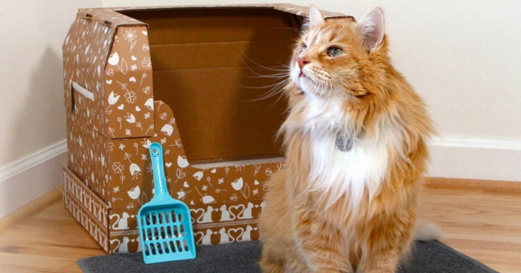 cat standing by cardboard litter box