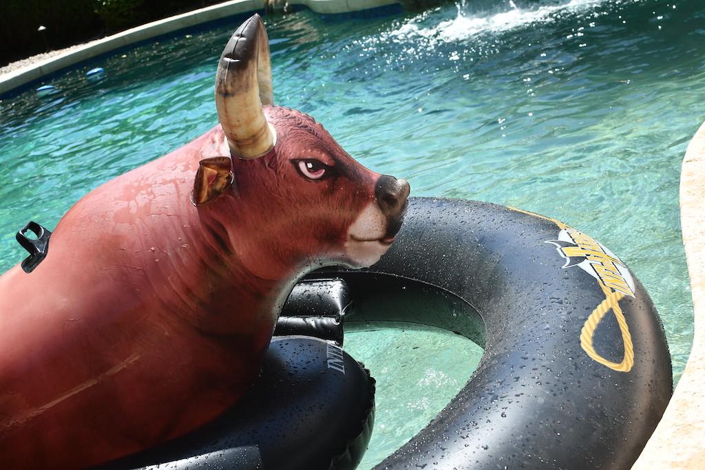giant bull riding pool float in pool