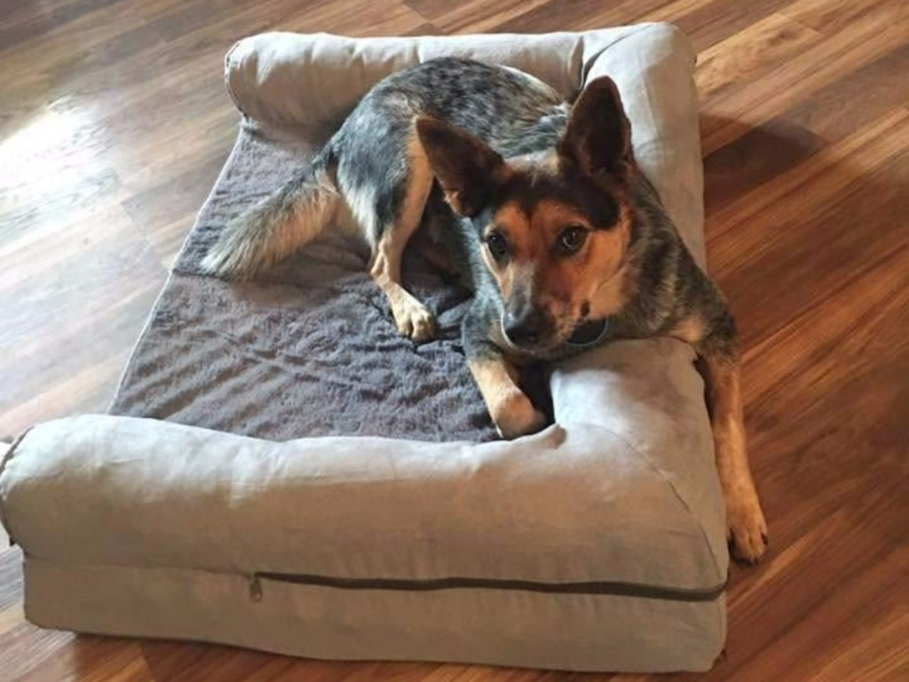 dog lounging on tan dog bed