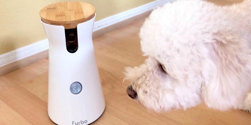 5 Best Dog Cameras to Buy on Amazon