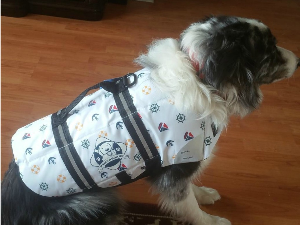 dog wearing white life jacket