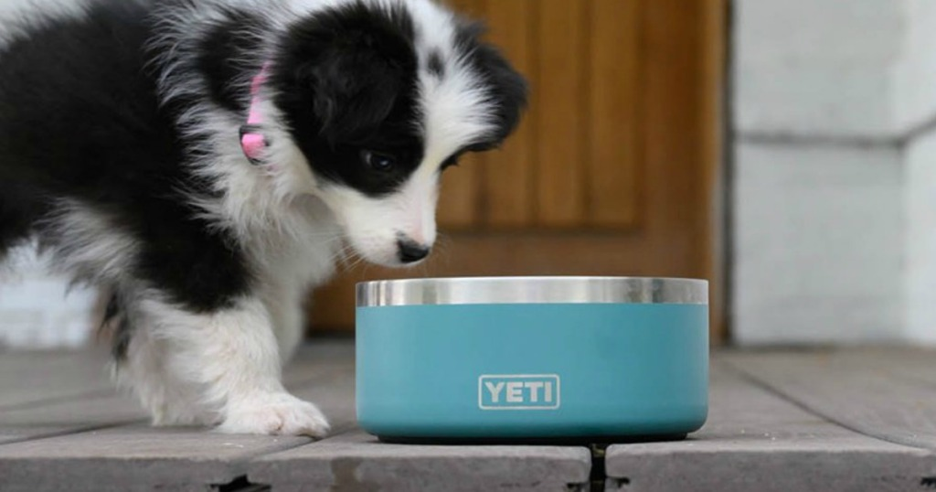 dog eating out of Yeti bowl