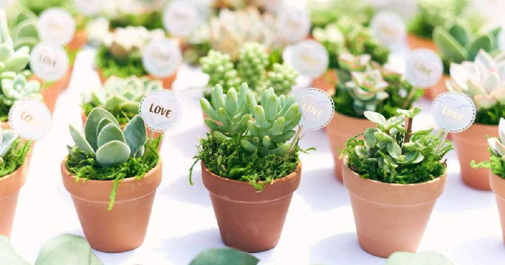 assortment of succulents in round plants with signs that say love on them