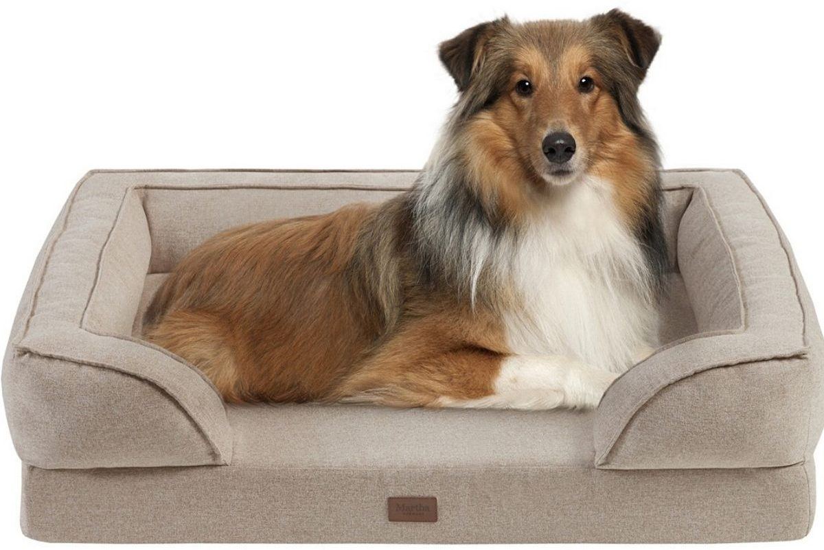 Collie in dog bed