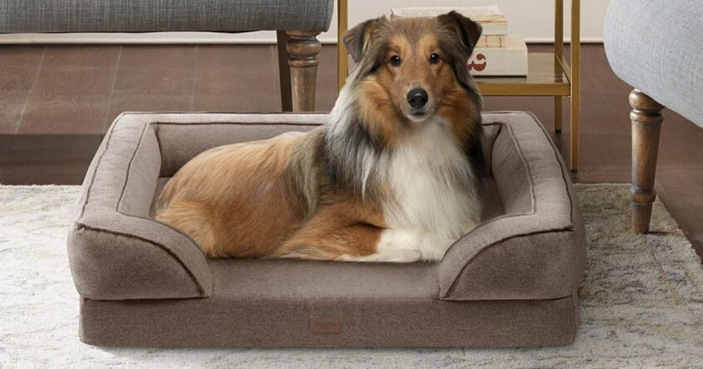 collie laying in a pet bed