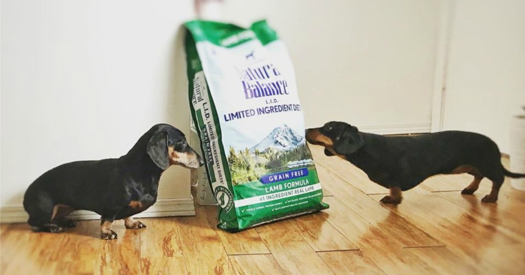 Natural Balance Dog Food next to two small weiner dogs