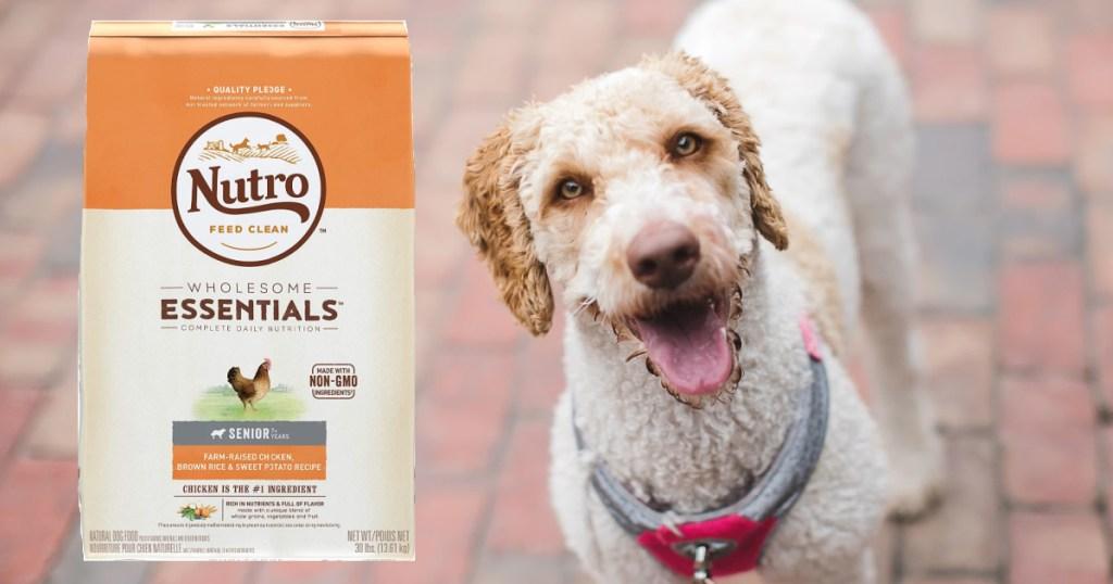 Nutro Wholesome Essentials Senior Dog Food 30-Pound Bag with dog