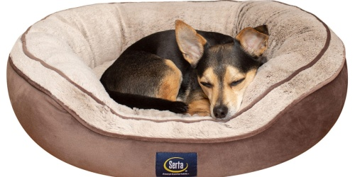 Serta Dog Bed Just $14.91 on SamsClub.com (Regularly $30)