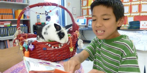 Teachers! Here's How to Get a Free Classroom Pet (Even If You're Teaching Virtually)