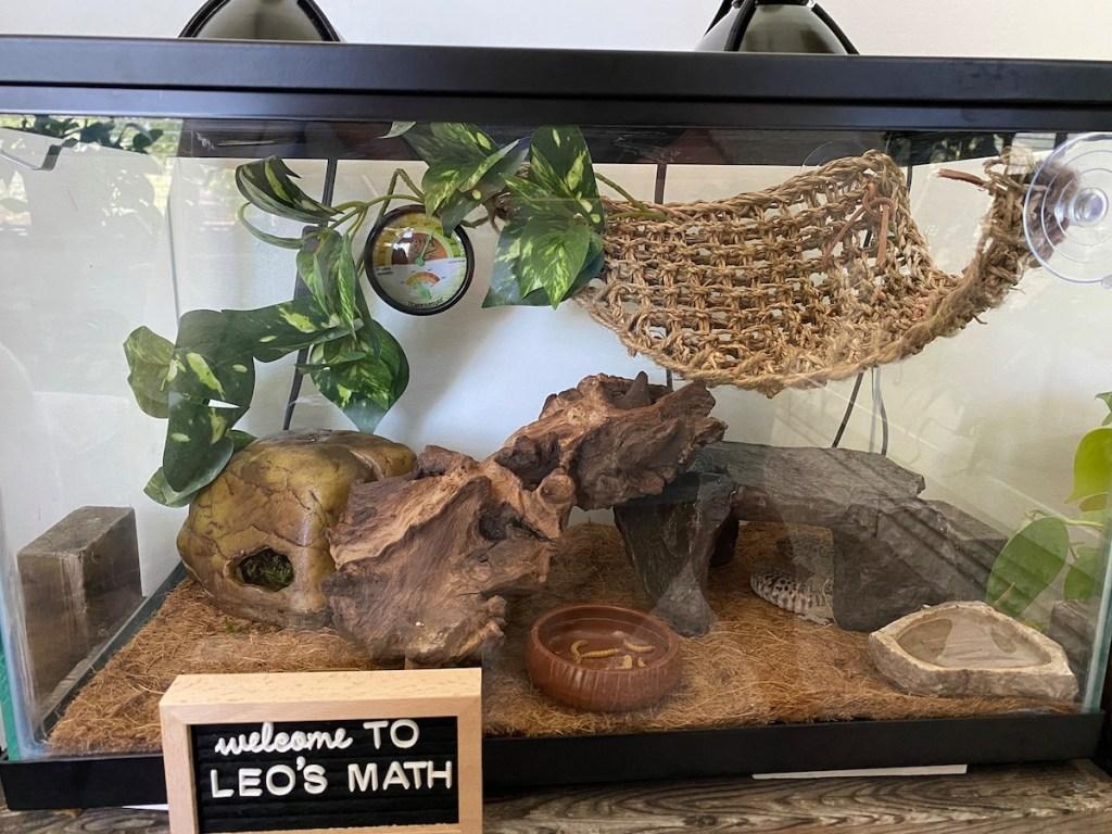 lizard in a terrarium