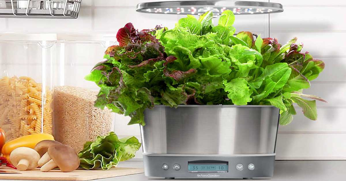 counter top indoor garden system with lettuce