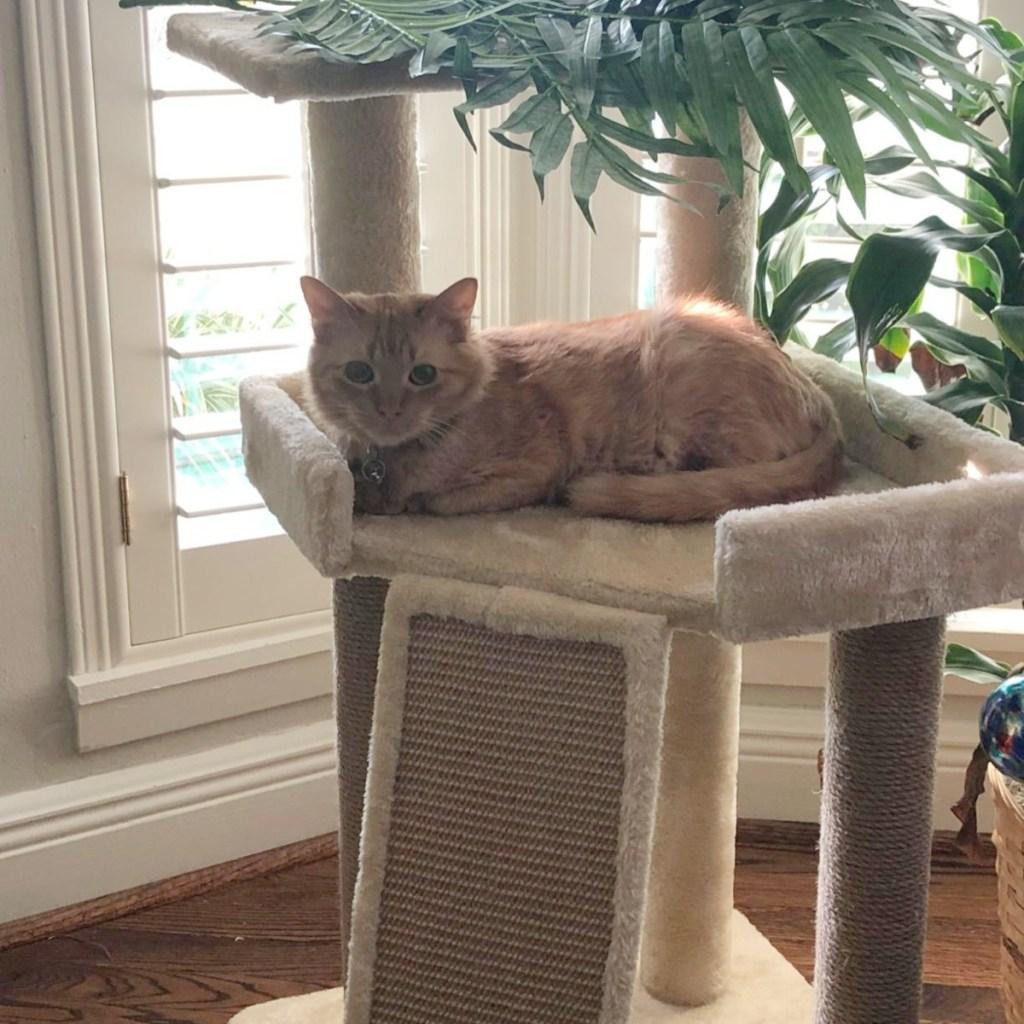cat sitting in beige cat tree