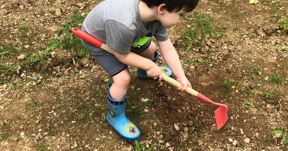 little boy in a garden hoeing