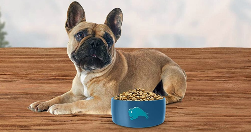 Small dog laying on wooden surface with a small blue bowl