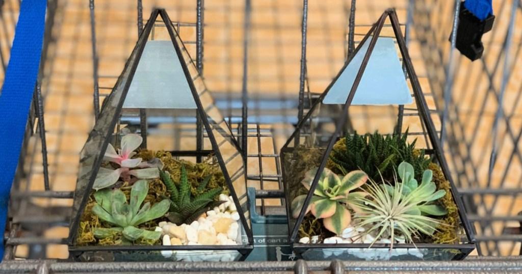 Geometric Terrariums in cart at ALDI