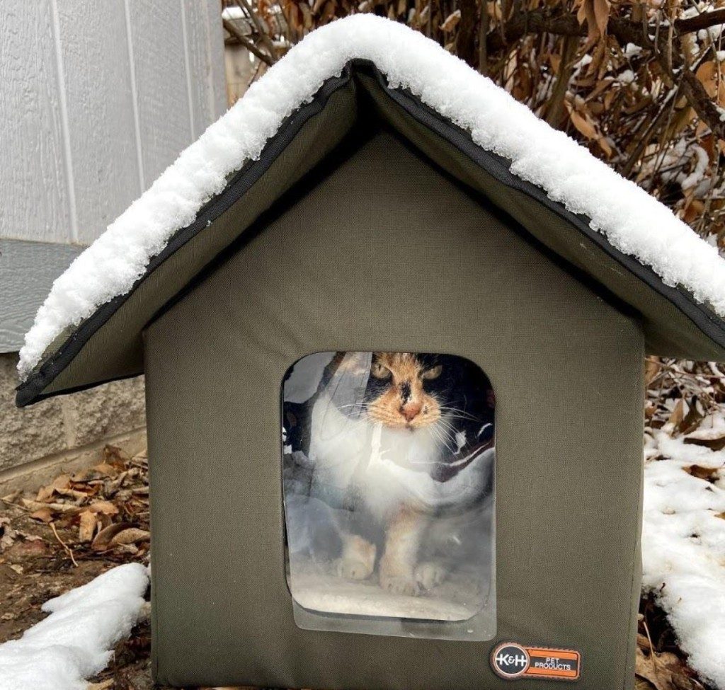 cat in outdoor cat house with snowy roof