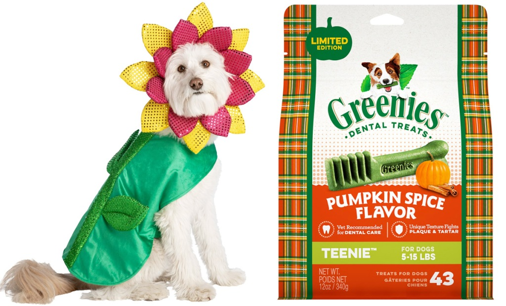 dog wearing sparkly sunflower halloween costume and bag of pumpkin spice flavored greenies dog treats