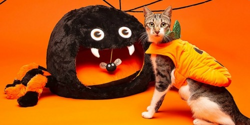 Get up to 75% Off PetSmart Pet Beds & Cat Scratchers w/ Free Store Pickup (Halloween Bed Only $15!)