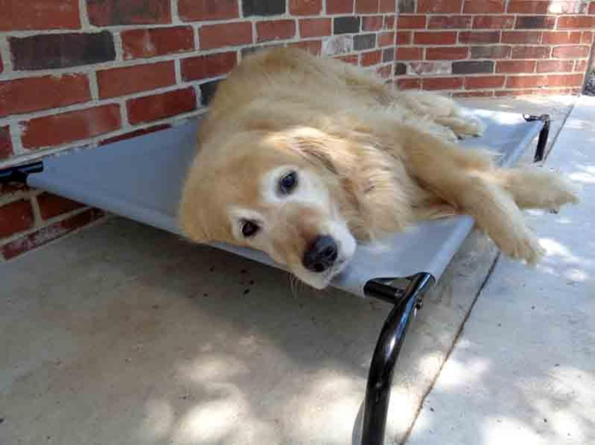 dog resting on elevated bed outdoors