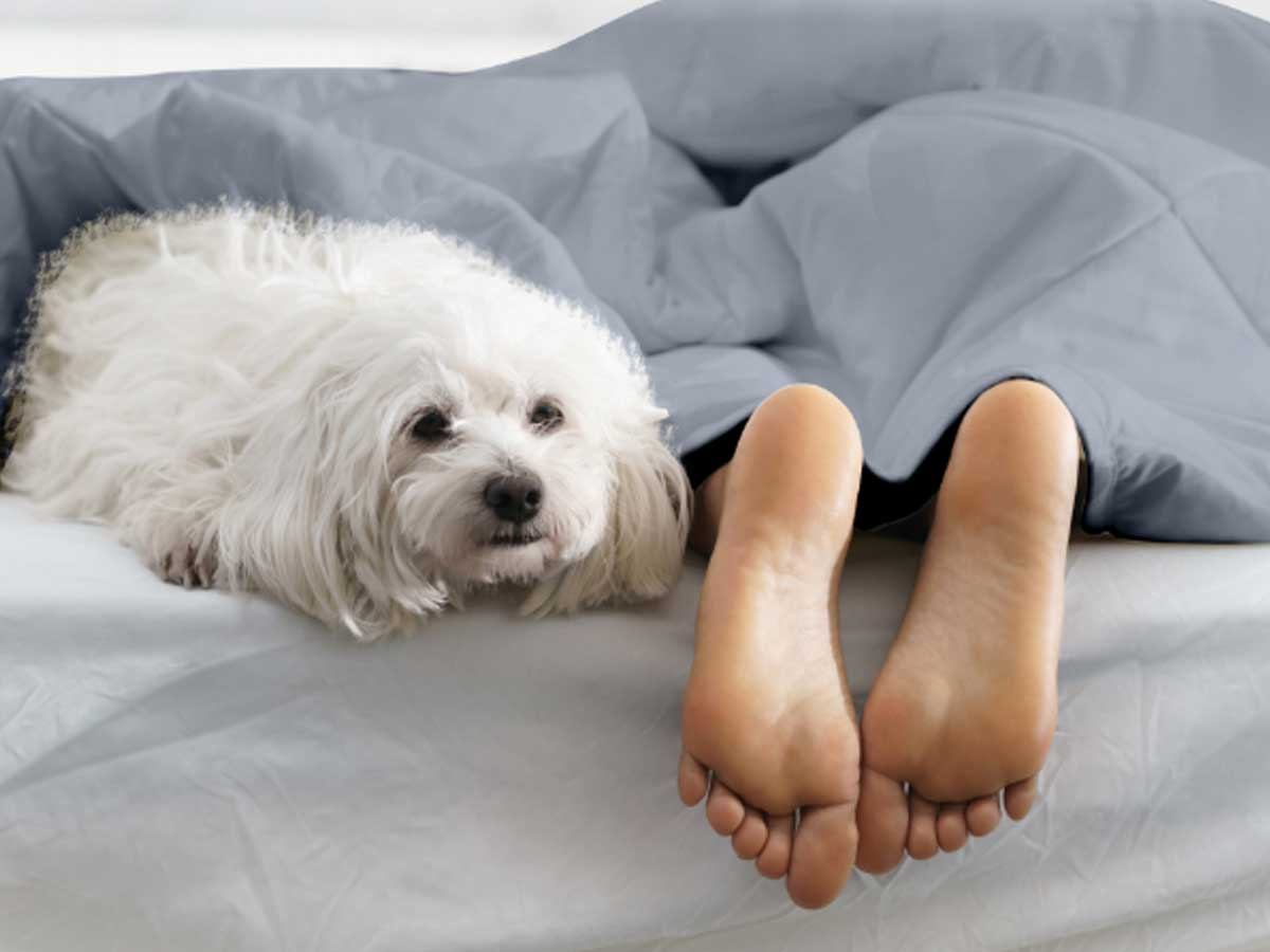 dog and girls feet poking out of blanket