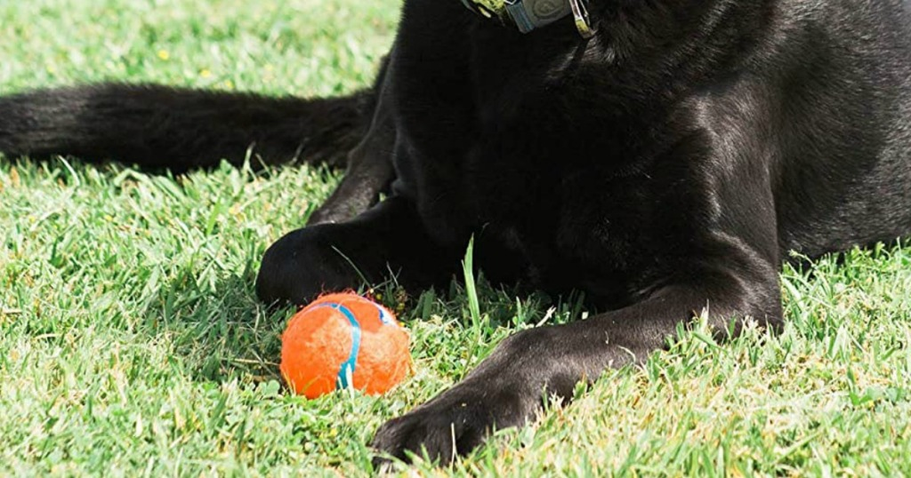 black dog and orange ball
