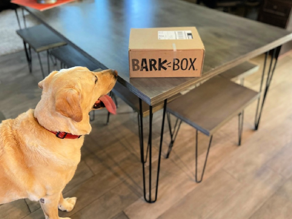 dog looking at barkbox on table