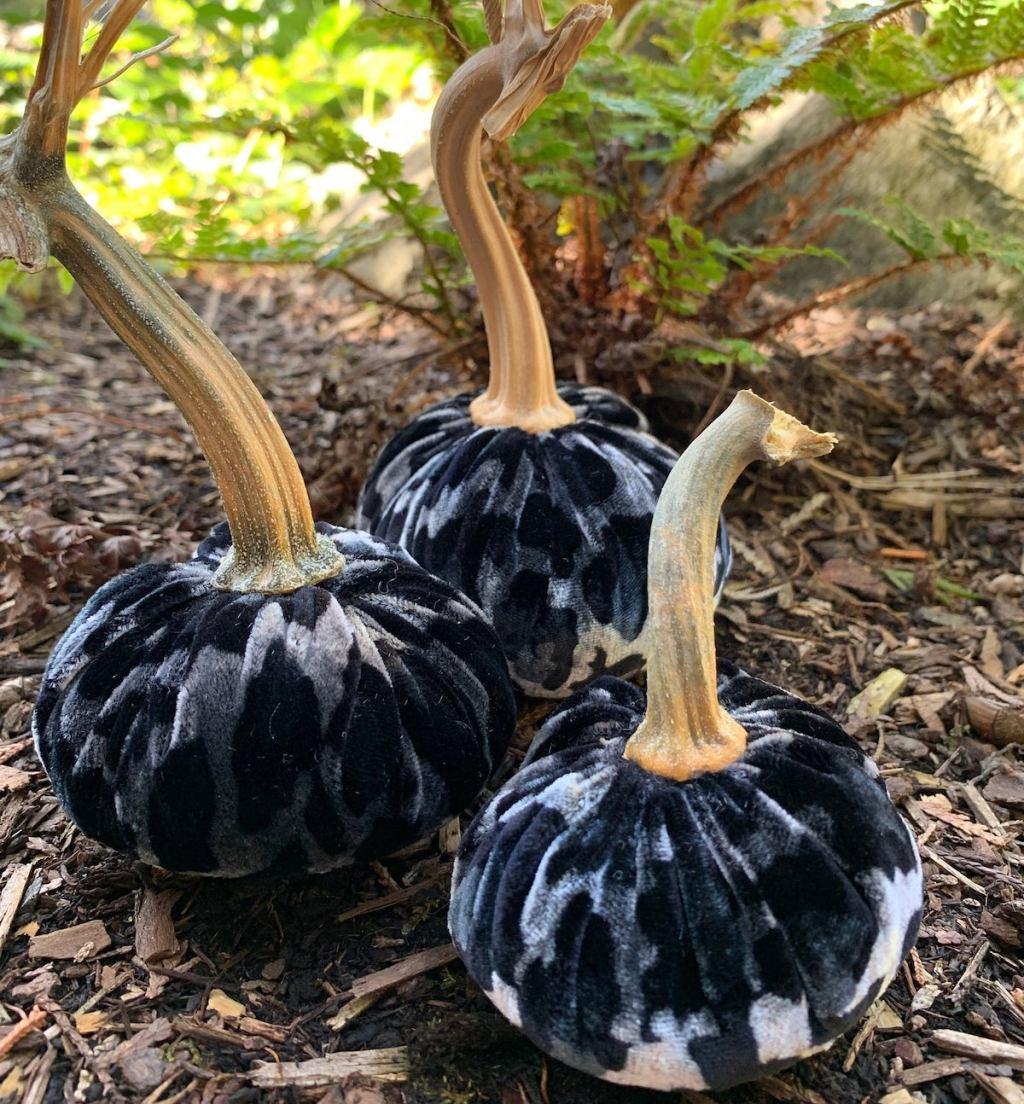 black leopard velvet pumpkins sitting in dried leaves
