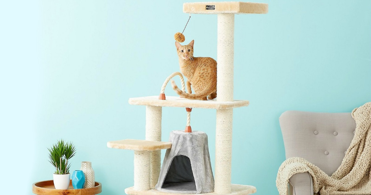 small kitten sitting on second tier of cat tree condo