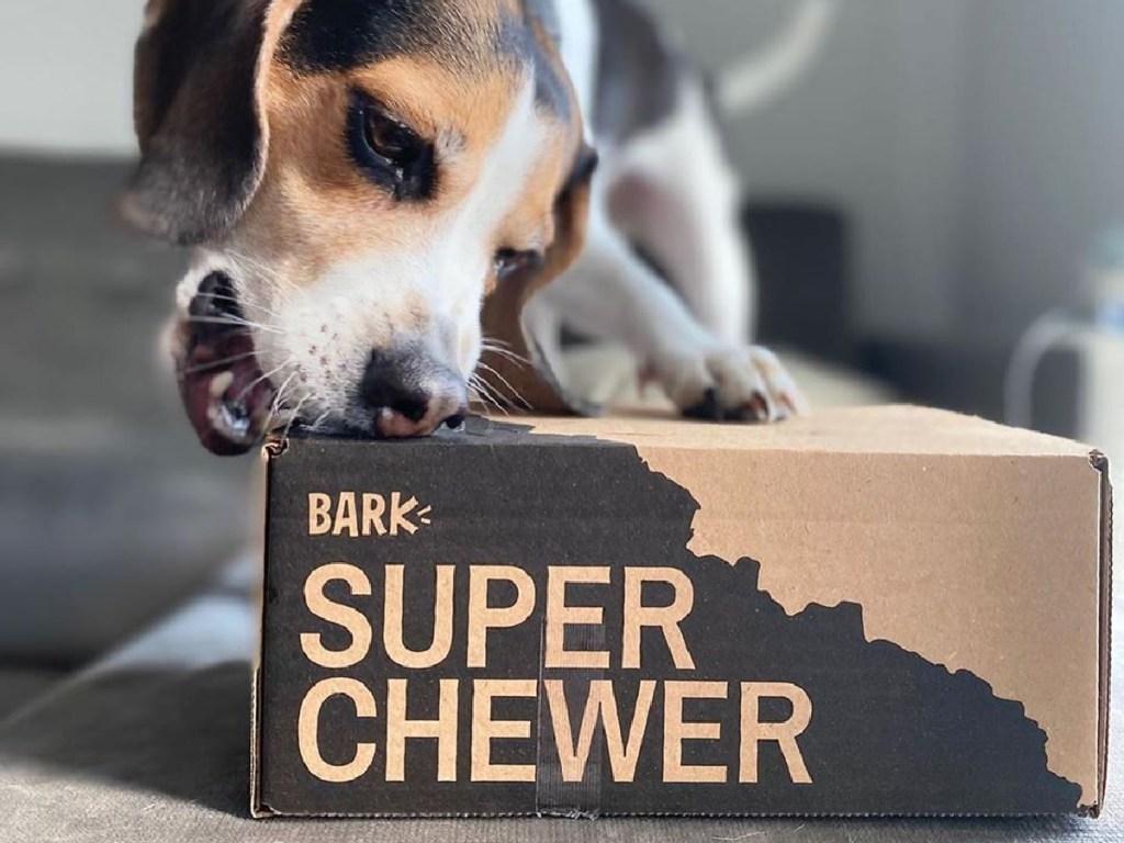 dog biting subscription box