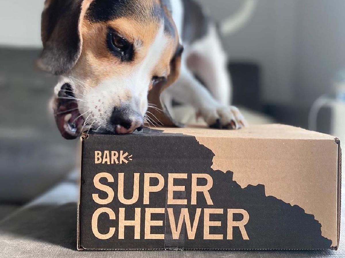 kotak langganan menggigit anjing
