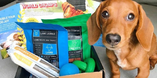 FREE BarkBox Super Chewer Box With Subscription Purchase ($45+ Value)