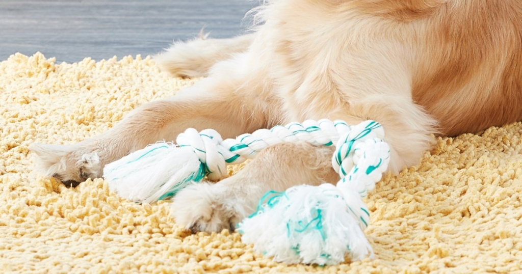 dog with white and green rope toy on carpet