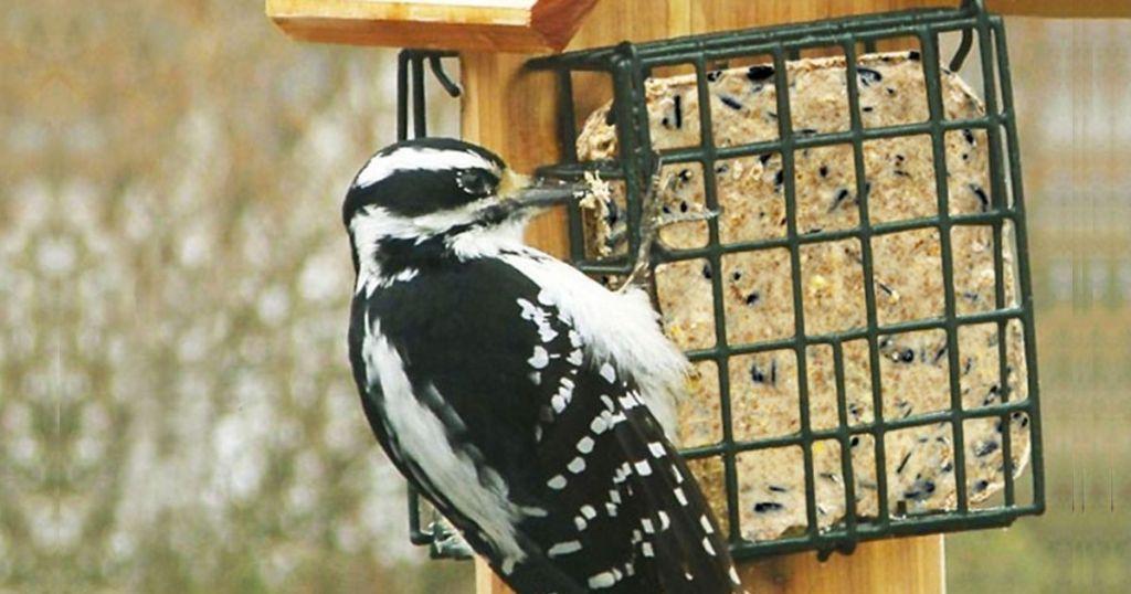 C&S Ez Fill Suet Basket Wild Bird Feeder