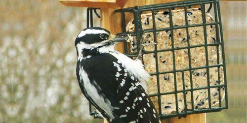 Free Ez Fill Suet Basket Wild Bird Feeder w/ Purchase on Chewy.com
